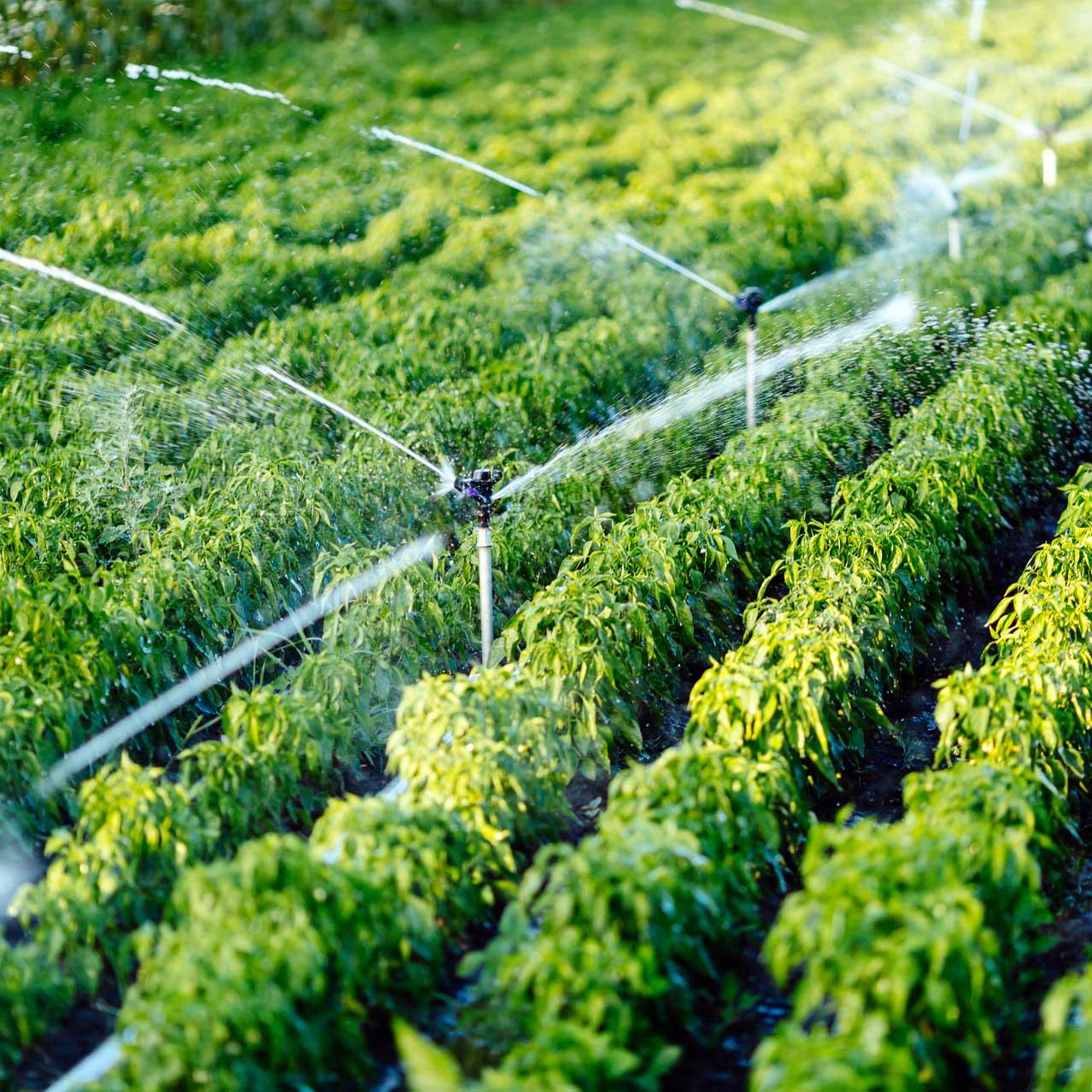 Problem suszy w Polsce. Jakie są przyczyny i jak możemy walczyć z niskimi zasobami wody w naszym kraju?